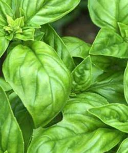 http://cocktailsandshots.com/wp-content/uploads/2018/06/cocktail_recipes_with_basil-250x300.jpg