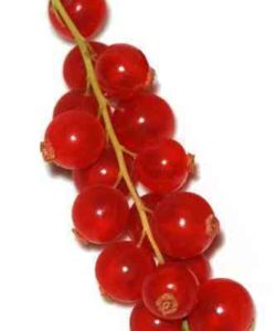 http://cocktailsandshots.com/wp-content/uploads/2018/06/cocktails_with_redcurrant_and_drinks_with_redcurrant-250x300.jpg