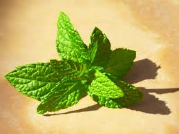 Mojito with fresh mint